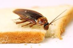 Call @ 9999787571. Mourierpestcontrol provides exclusive Thursday offers on our pest control services. Uproot cockroaches from your premises with excellent and high-performing cockroach control service of Mourier pest control.