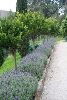 50 Beautiful Long Driveway Landscaping Design Ideas 20 - I like the way this adds length. Flowers are good too. Narrow strip like this next to the school wa - Garden Edging, Garden Paths, Garden Beds, Grass Edging, Border Garden, Brick Edging, Back Gardens, Outdoor Gardens, Cyprus Gardens