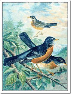Bird Unit Study @ Our Busy Homeschool
