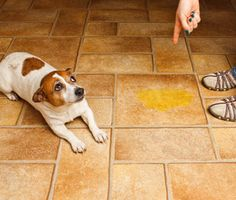 3 Ways You Might Contribute to Your Dog's Bad Behavior