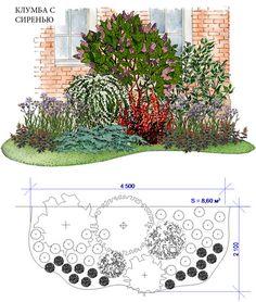 Клумба весеннего цветения. Доминантой является сирень, а рядом белым водопадом зацветает спирея серая. Чуть позже, в июне, цветут ирисы и живучка. Но и летом и осенью композиция не теряет своей декоративности благодаря пурпурным листьям барбариса и сизой хвое можжевельника. Клумба подходит для открытых солнечных мест. Необходимое пространство – 4,5м*2,1м Проект: Клумба с сиренью — КЛУМБАshop — MyHome.ru