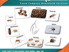 شركة مكافحة حشرات بالمدينة المنورة – جوال