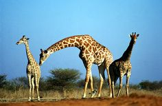 Afryka tanie przeloty