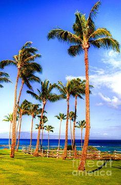 Kapalua Maui. #treasuredtravel