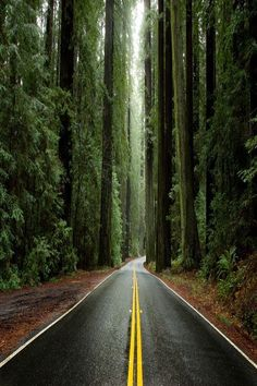 Avenue of the Giants, Humboldt Redwoods State Park, California. By: Justin Jones - Yahoo Image Search results