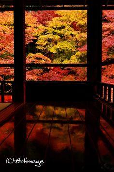 Ruriko-in Temple, Kyoto, Japan 瑠璃光院,京都  Beautiful Places To Visit, Beautiful World, Japan Landscape, Japan Garden, Temple, Photos Voyages, Japanese Architecture, Kyoto Japan, Japanese Beauty