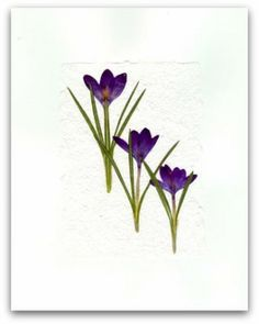 pressed flower art - Google Search