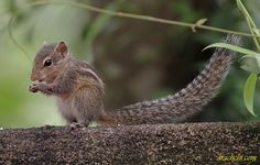 Flickriver: Most interesting photos from Kotugoda, Western, Sri Lanka