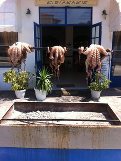 Lunch, Aegina Greek Islands, Summer Of Love, Athens, Octopus, Greece, Beautiful Places, Landscapes, Bucket, Lunch