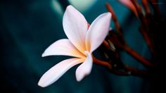 Awesome Flower Close Up Wallpaper