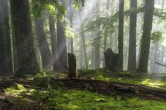 cuiledhwen: Emerald Beams by jasonwilde of attraction of abundance wealth mind sculpting affirmations mind programming of vibration abundantly Forest Background, Mind Over Matter, Tree Forest, Beautiful World, Art Inspo, Beams, Beautiful Pictures, Places To Visit, Earth