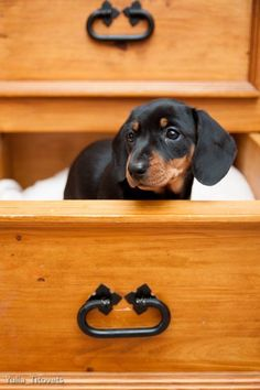 Would even be a great idea for a small dog with new puppies that aren't yet able to climb!!!! #SmallDog #dachshund