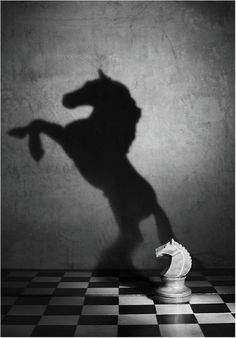 ○ Photography black and white wonderful style by Victoria Ivanova still life Soul of the mustang #surreal #shadow