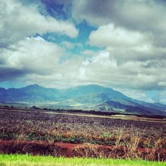 Dole Plantation in Oahu, Hawaii. Took this picture in June 2013. Can't wait to go back.