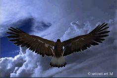 """""""A águia voa sozinha, os corvos   voam em bandos. O insensato necessita   de companhia, o sábio necessita de solidão!""""     Friedrich R..."""