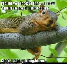 """""""squirrel-proof"""" bird feeder"""