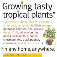 growing tropical vanilla