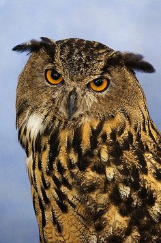 in ❤ with owls . . .