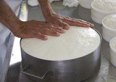 Veja quais são os equipamentos para fazer queijo artesanal que você precisará para trabalhar.  #queijoartesanal #equipamentos