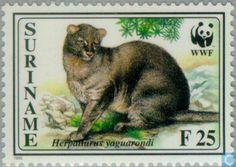 Jaguarandi. Postzegel Suriname 1995 WNF. source and photo: www.catawiki.nl