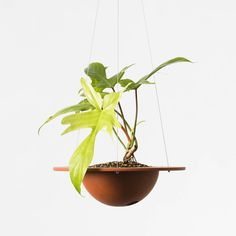 Izawa Seito | revolutionary indoor terracotta pots