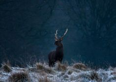 On the Throne - Hans-Peter Henrikson on 500px