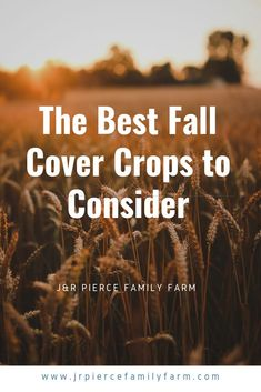 Think you know everything there is to know about organic gardening? Hold up! You need to learn more about cover crops. Cover crops offer so many benefits to organic gardeners. I'll tell you why in this post, and also give you suggestions on the best crops Diy Herb Garden, Herb Garden Design, Home Vegetable Garden, Herb Gardening, Container Gardening, Garden Ideas, Veggie Gardens, Flower Gardening, Organic Gardening Tips