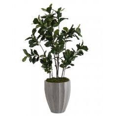 Fiddle-Leaf Fig Tree I