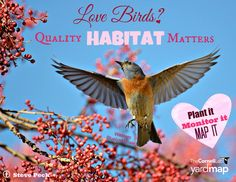 Birds have different habitat needs. Research from our own Janis L. Dickinson and Megan C. Milligan, shows that birds carefully assess the landscape seeking out subtle, but often significant features when selecting a nesting site. This 12 year, 700 acre study in a nature preserve in central California, shows how important diverse habitat can be. To read more: http://www.bioone.org/doi/10.1642/AUK-15-187.1