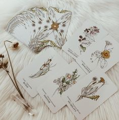 Hedgewitch Botanical Oracle Cards- Smokey Spells LLC Linestrider Tarot, Oracle Tarot, Oracle Deck, Tarot Card Decks, Tarot Cards, Wicca, Card Drawing, Modern Witch, Witch Aesthetic