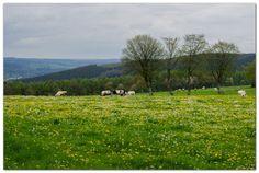 Kortbij vakantie in de Belgische Ardennen www.vakantieplus.be