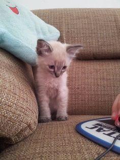 Calvin Kat...