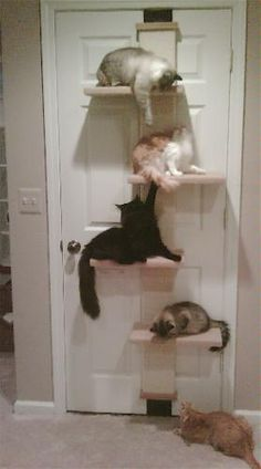 Lack the space but want a kitty perch...here's an idea!