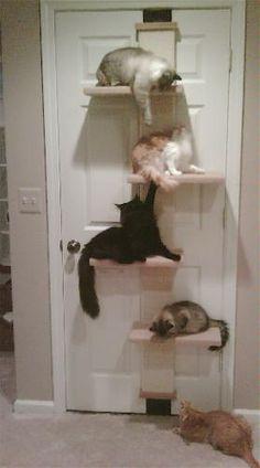 Árbol artificial en puerta para gatos !!!!