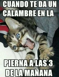 webcam - The World`s Most Visited Video Chat Funny Animal Memes, Funny Cats, Funny Jokes, Funny Animals, Hilarious, Memes Humor, Bts Memes, Funny Spanish Memes, Spanish Humor