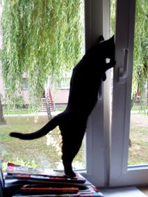 """""""Cats like doors left open in case they change their minds."""" --Rosemary Nisbet"""