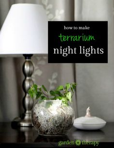 Make a night light terrarium: houseplant by day, mystical glowing orb by night: this terrarium lights up the evening!