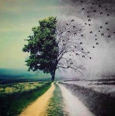 Which path would you choose? Lord King, Street Art, Illusion Art, Magritte, Our World, Photo Manipulation, Twitter, Psychedelic, Mother Nature