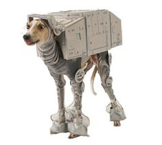 10 Silly Dog Costumes for Halloween