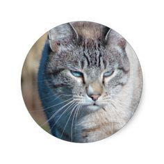 Cat Walk Sticker  For The Good Children