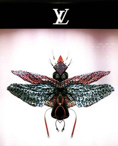 Pink-winged Insect (not sure of species). | The Amazing Louis Vuitton Insect Window Displays