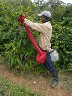 Cheapest Coffee Mugs Highlands Coffee, Coffee Process, Cheap Coffee Mugs, Coffee Study, Expresso Coffee, Home Coffee Machines, Coffee Origin, Death Before Decaf, Or Noir