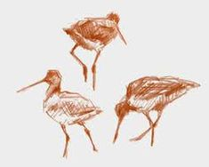 godwit drawing - Google Search Bird, Google Search, Drawings, Animals, Inspiration, Sketches, Animales, Biblical Inspiration, Animaux