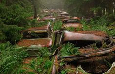 Photos of a traffic jam stuck in the woods for 70 years