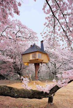 Las 10 casas en el árbol más asombrosas del mundo - Vida Lúcida