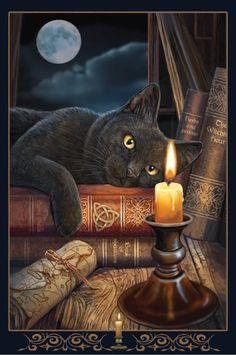 Foto Fantasy, Fantasy Art, Halloween Pictures, Halloween Cat, Salem Cat, Frida Art, Witch Cat, Cat Wallpaper, Cross Paintings