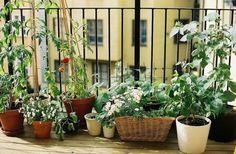 Balkongarten anlegen: Frisches Gemüse in Kübeln anbauen, WOHNKULTUR, balkon-garten-anlegen-tomaten-spaliere Apartment Balcony Garden, Small Balcony Garden, Backyard Garden Landscape, Garden Landscaping, Balcony Gardening, Potted Garden, Balcony Plants, Potted Plants, Small Balconies