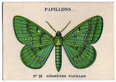 Papillons - French Butterfly Card - The Graphics Fairy