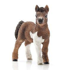 Shetland Pony Foal #13752 - FUZZY!!