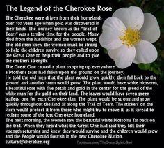 Amérindien - la légende de Cherokee Rose